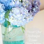 Tip to Keeping Cut Hydrangeas Looking Fresh….